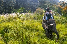 Elephant Safari in Chitwan